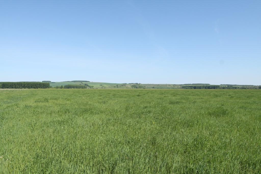 Арбузовские луга, Цильнинский район