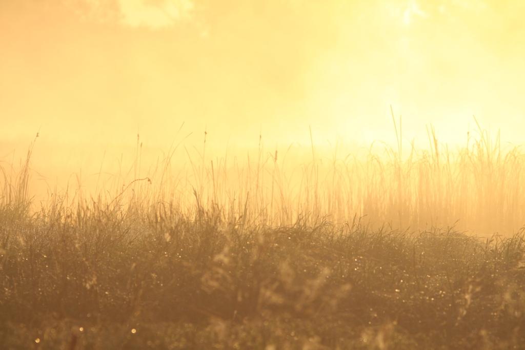 Свияжские луга на рассвте. фото М.Корепов (1)